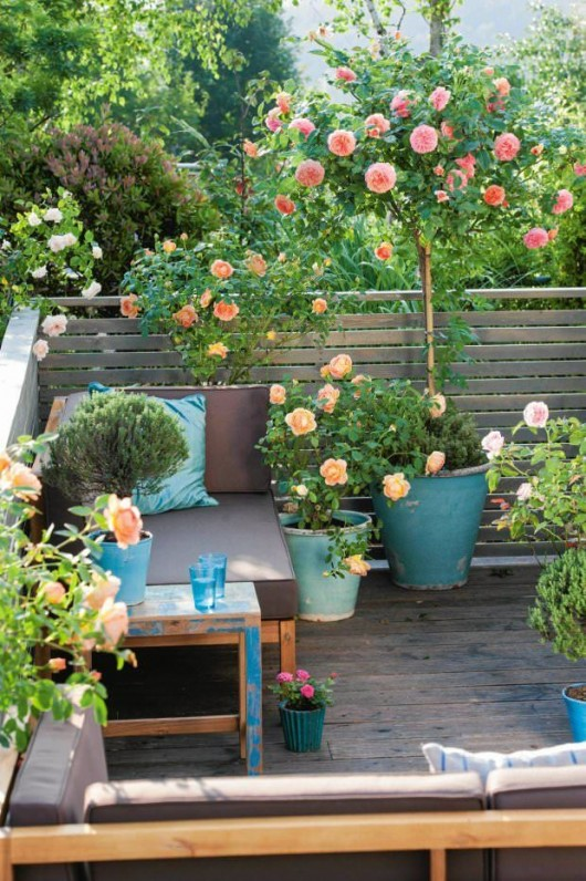 DIY Garden: Top Gardening Ideas for Small Balcony Garden