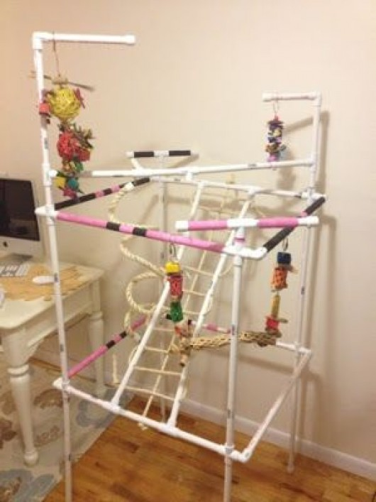 Diy jungle gym pvc diy do it your self for Diy jungle gym ideas