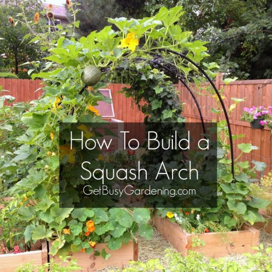 Garden Arbor Ideas three dogs in a garden How To Build Climbing Plants Garden Arch Diy Squash Arch