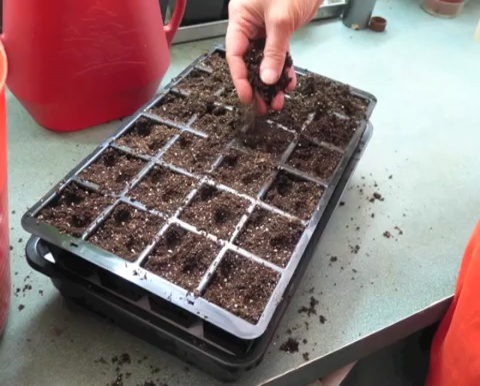 How to grow tomatoes step by step (7)