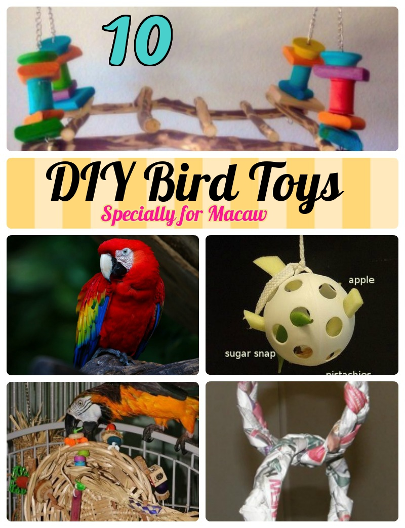 Diy Bird Toys : Most simplest ideas of diy toys for macaws craft