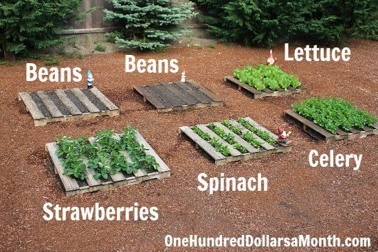 6 Diy Pallet Garden Ideas And Furniture For Your Small Backyard - Pallet-garden-ideas