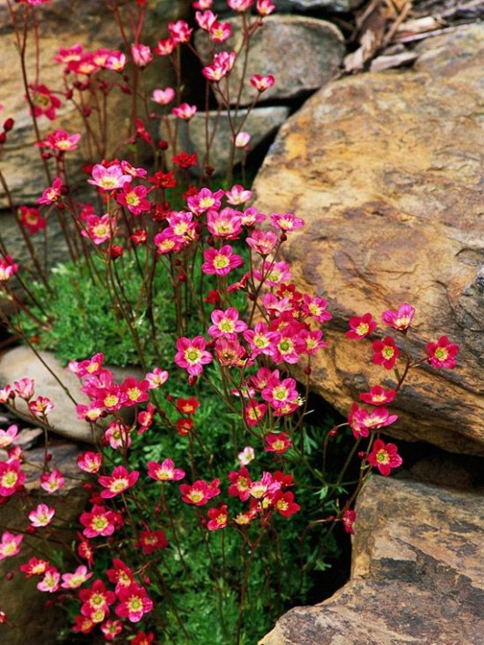 Rock-garden-ideas
