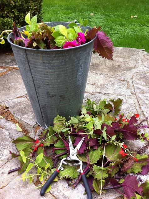 Compost-budget-garden-ideas