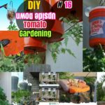 #16 DIY Growing Tomatoes: How to Grow Tomatoes Upside Down in Containers