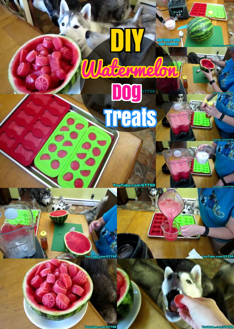 DIY Watermelon Dog treat Recipe for Summer