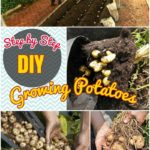 DIY Growing Plants: How to Grow Potatoes in Containers Step by Step Tutorial