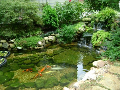 Clear Water Koi Fish Pond Water Garden