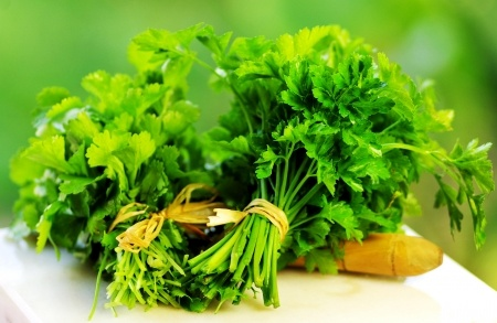 Growing Cilantro herb garden ideas (3)