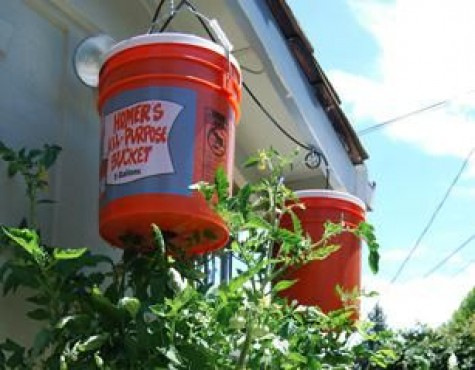 16 Diy Growing Tomatoes How To Grow Tomatoes Upside Down