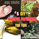 DIY Growing Tomatoes: #5 Free Natural Fertilizers and Tips for Growing Tomatoes