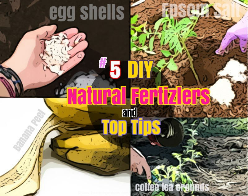 How to grow tomatoes wit natural fertilizers