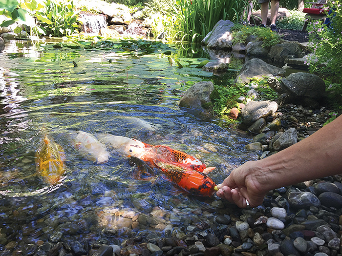 60 diy water garden ideas container and pond water garden for Koi pond maintenance near me