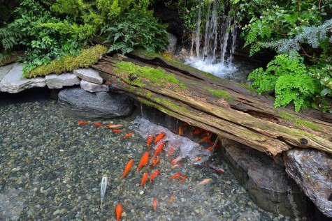60 diy water garden ideas container and pond water garden for Natural koi pond design