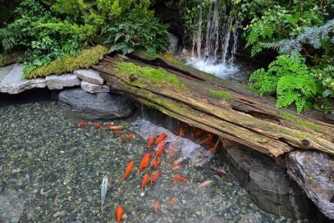 Natural-pond-garden-ideas