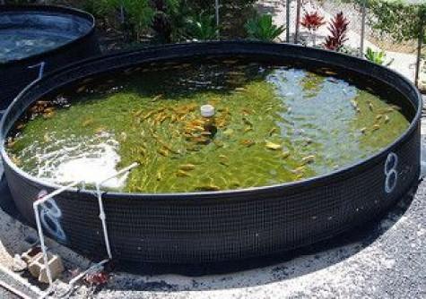 Diy water garden ideas 54 pond garden ideas and design for Fish pond hydroponics