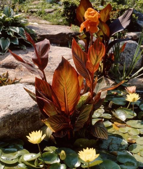 Water-Garden-Pond-Plant-Ideas