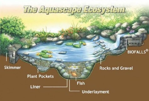 Diy water garden ideas 54 pond garden ideas and design for Koi pond plant ideas