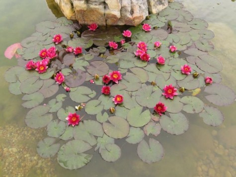 Diy water garden ideas 54 pond garden ideas and design for Easy pond plants