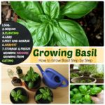 Growing Basil #7 Steps How to Grow Basil – Planting to Harvest & Storage