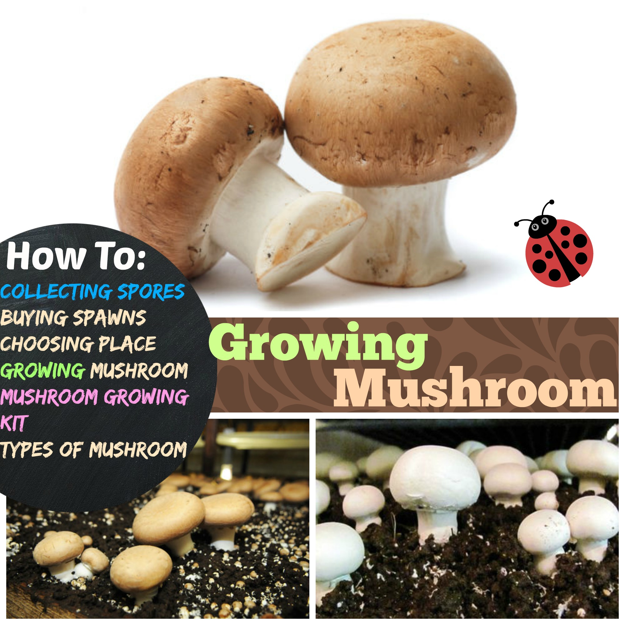Growing mushrooms how to grow mushroom