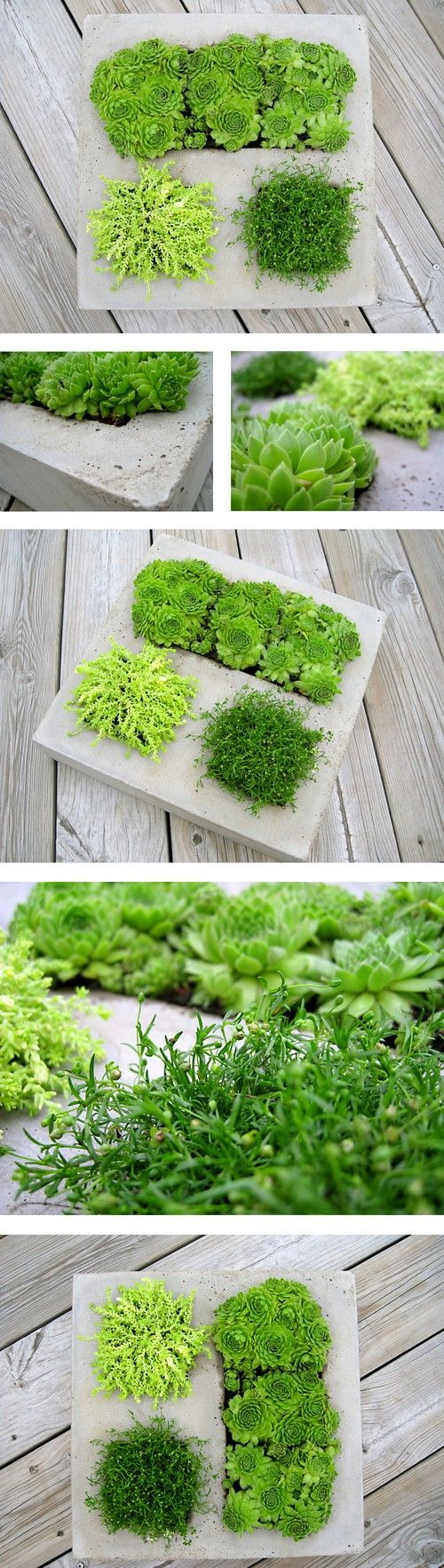 diy-modern-and-concrete-planters-10