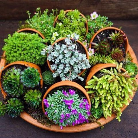 diy-pot-planters-pot-plants-5