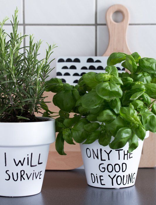 diy-pot-planters-pot-plants-9