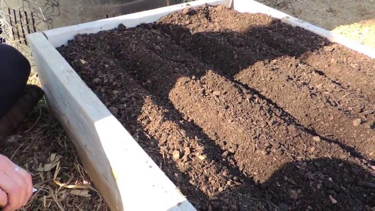 Growing carrots soil reuirement for carrots