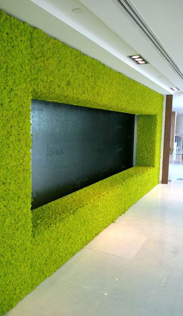 beautiful-wall-moss-at-abu-dhabi