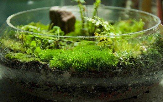 Diy Terrarium Moss Graffiti 28 And Succulent