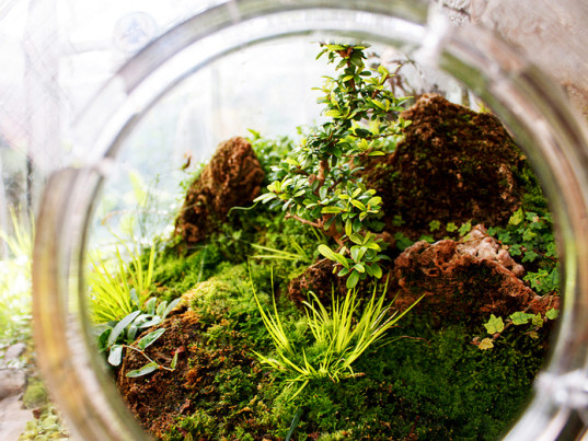 diy terrarium moss graffiti 28 moss and succulent terrarium garden. Black Bedroom Furniture Sets. Home Design Ideas