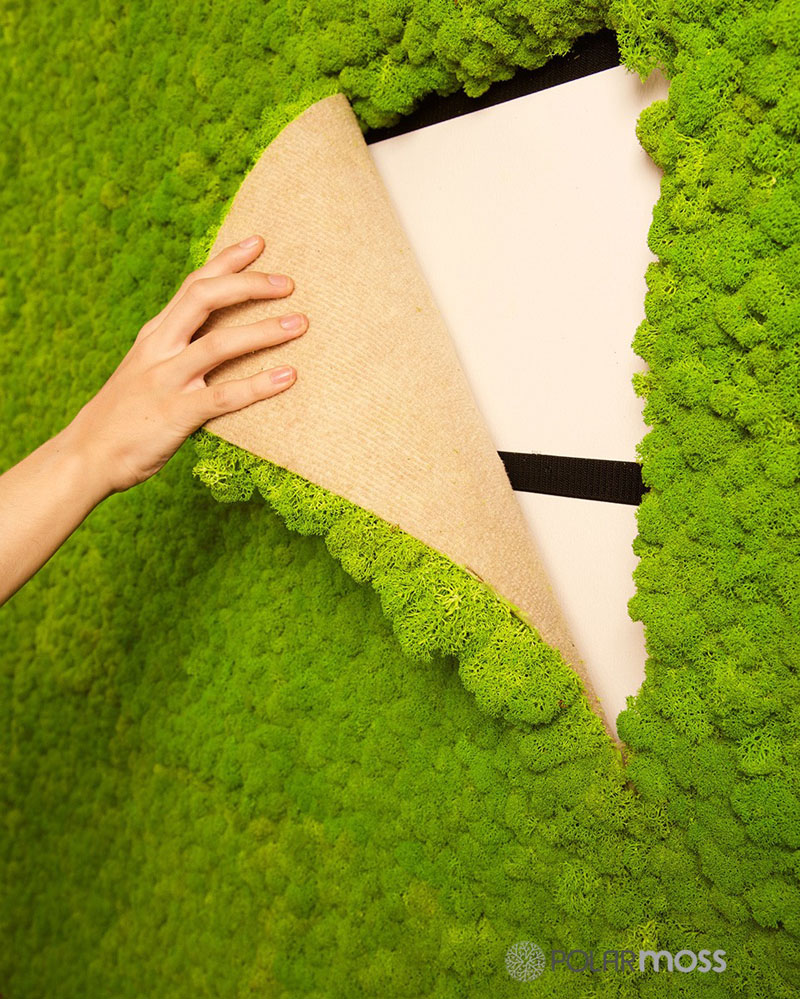 Diy Moss Ideas 12 Moss Wall Art And Inspiration