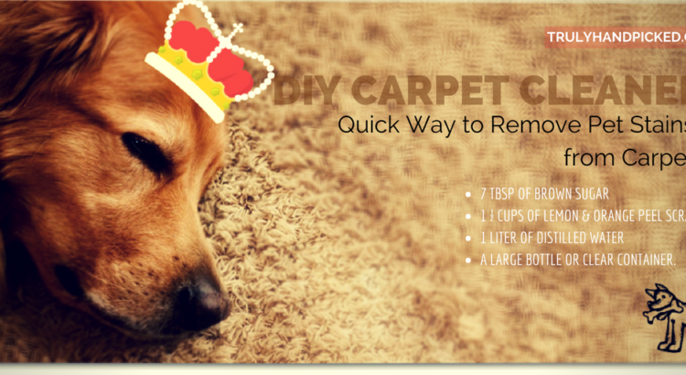 Pet Stains out of Carpet